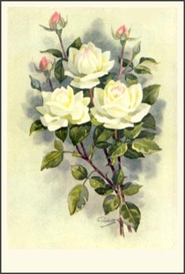 картинки цветы на открытку